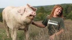 The VEGAN POWERHOUSE of Farm Sanctuary | Susie Coston