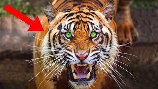 FIERCEST Animals In Asia!