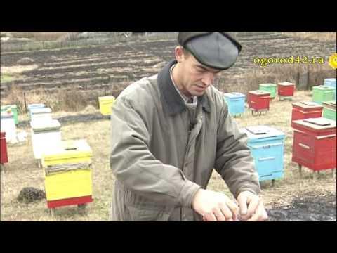 Защита пчел зимой от мышей