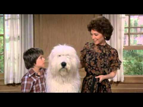Trailer do filme Felpudo, o cão feiticeiro
