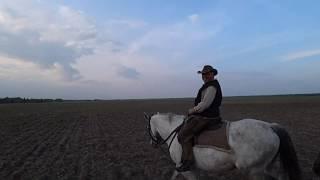 В глухой белорусской деревне катаюсь с отцом на лошадях . Красивые лошадки и пейзажи.