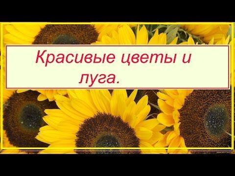 Красивые Цветы Луга Видео