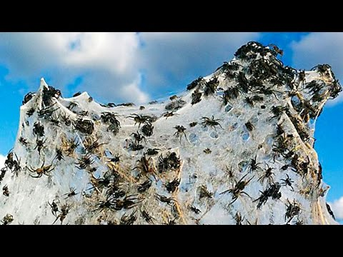 25,000 SPIDERS INVADE SMALL TOWN - SourceFed