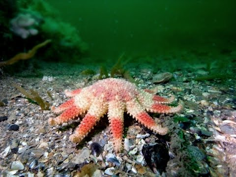 Diving Dublin Bay