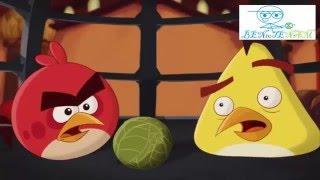Angry Birds Toons Loquendo El milagro de la vida