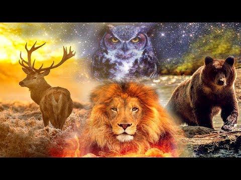 L'animale Totem -