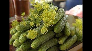 Самые вкусные рецепты огурцов на зиму / коллекция рецептов / заготовки на зиму!
