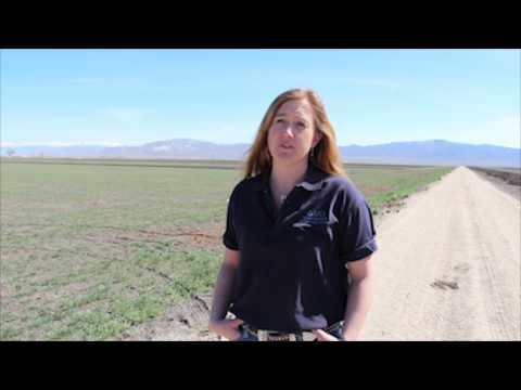Lovelock Shows Some Love For Soil Health: A Cover Crop Story video