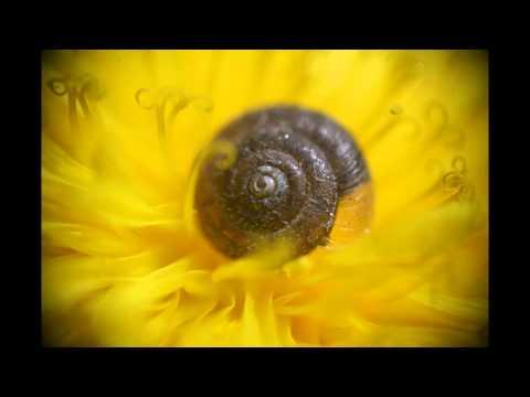 Drewno From Las - Polski Film