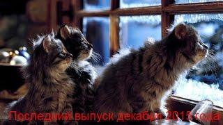 Смешные животные. Новое. ДЕКАБРЬ 2015. Выпуск №1 - КОШКИ