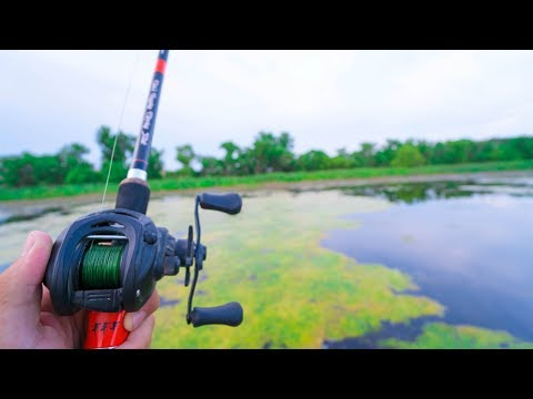 BEST Frog Fishing Lake EVER!!!