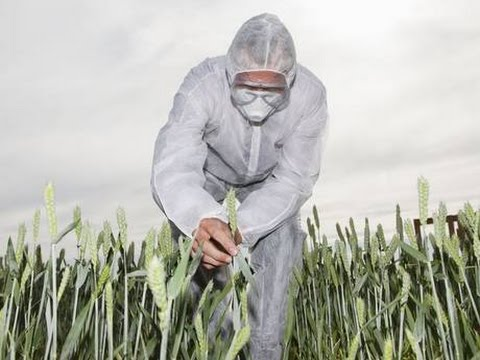 Round-Up Ready GMO Crops ARE Potentially Carcinogenic! (w/ Dr. David Schubert)