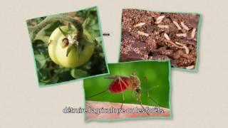 INVACOST : prévenir une invasion massive d'insectes