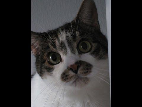 Steinkot - Gefährliche Verstopfung Bei (alten) Katzen