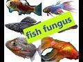Aquarium fish treatment