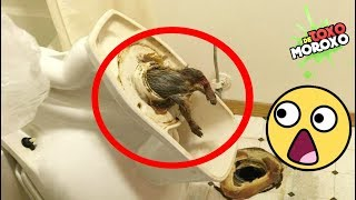 Mira Lo Que Podría Estar en tu Baño | 7 Cosas EXTRAÑAS Encontradas en BAÑOS