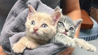 Котята остались без мамы, а потому поддерживали друг друга, зная, что они одни на всем белом свете