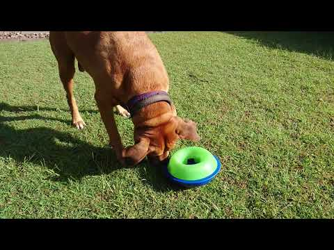 Whippy with Kong Tiltz Dog Foraging Toy