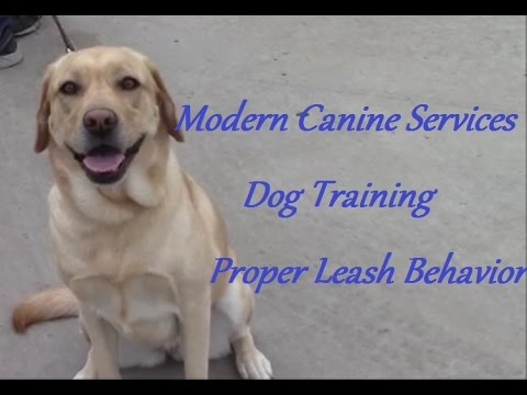 Teach Your Excited Dog to Behave On-Leash