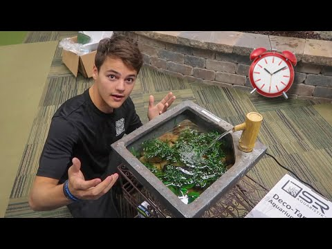 How To Make GUPPY POND In 10 Minutes!!!