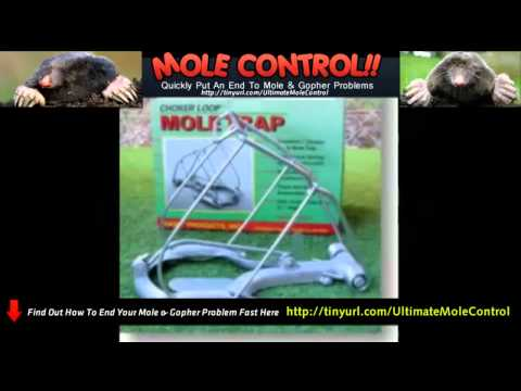 how-get-rid-of-moles-&-pest-control-mice