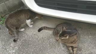 猫の喧嘩中に頭をツンツンしてみました。