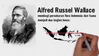 Media Cerita Bergambar Persebaran fauna Indonesia (Geografi kelas XI)