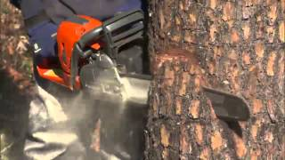 How to Safely Fęll or Cut Down a Tree Using a Chainsaw | Husqvarna