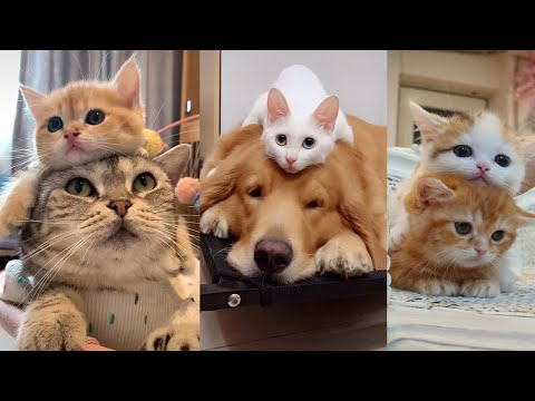 Little Baby Cat and Dog Funny Videos Compilation # 25