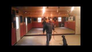 Chelsea - Basic Obedience Training