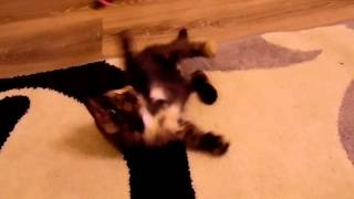 котенок 2 месяца