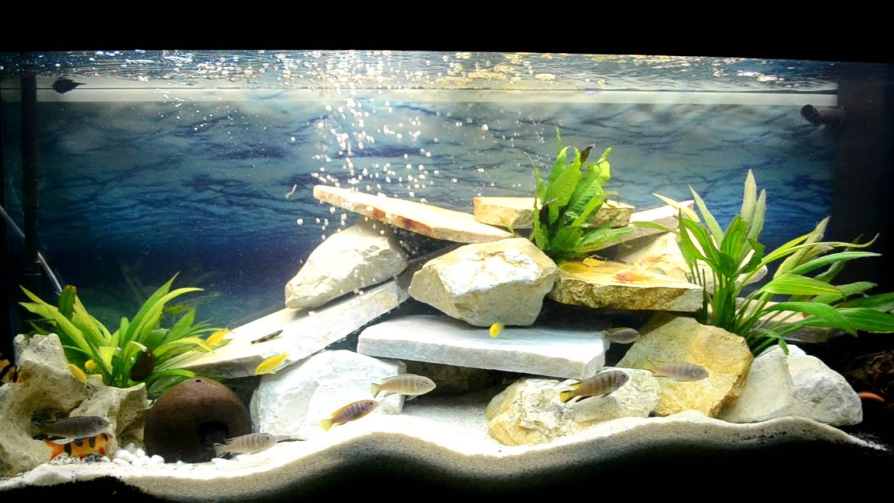 malawiaquarium 240 liter youtube. Black Bedroom Furniture Sets. Home Design Ideas
