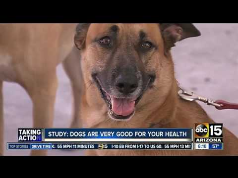 Study: Dogs are very good for your health