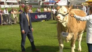Pencampwriaeth y Gwartheg Biff - Rhan 3 | Beef Cattle Championship - Part 3