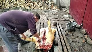 Забой свиньи - обзор, разборка туши