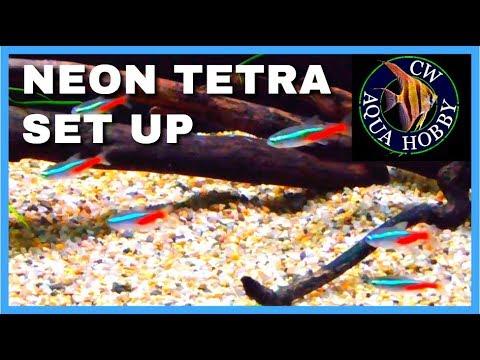 Setting Up A Neon Tetra Tank - How To Start A Tetra Tank