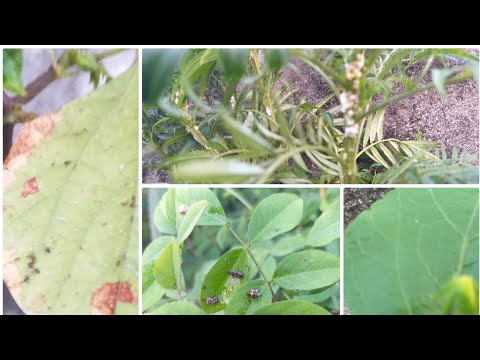 How  to protect  your plant from past and insects/Ultimate organic pest control formula