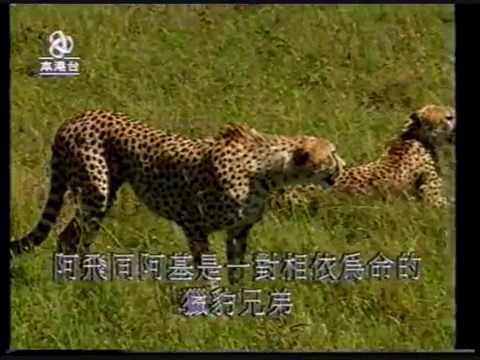《亞洲電視》在森林和原野 序幕篇 (廣告 1999年) - YouTube