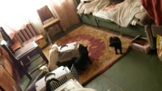 Изъятие кошек из квартиры на Березняках.Людмила Киселева.Жестокое обращение с животными.