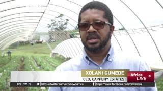 Entrepreneur farms strawberries, despite unsuitable conditions thumbnail