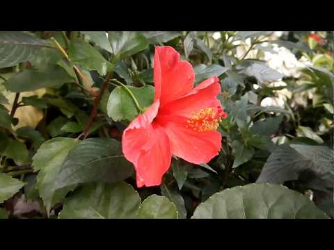 Nursery At Town Hall Mohammadpur Dhaka | Plants Shop | ফুল ও ফল গাছের দোকান