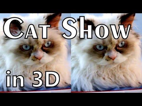 "3D - Выставка кошек ""Гран-При Сибири 2016"" (WCF) YT3D (dv) SBS"