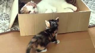 Cat kitten trolls. Кот троллит котенка.