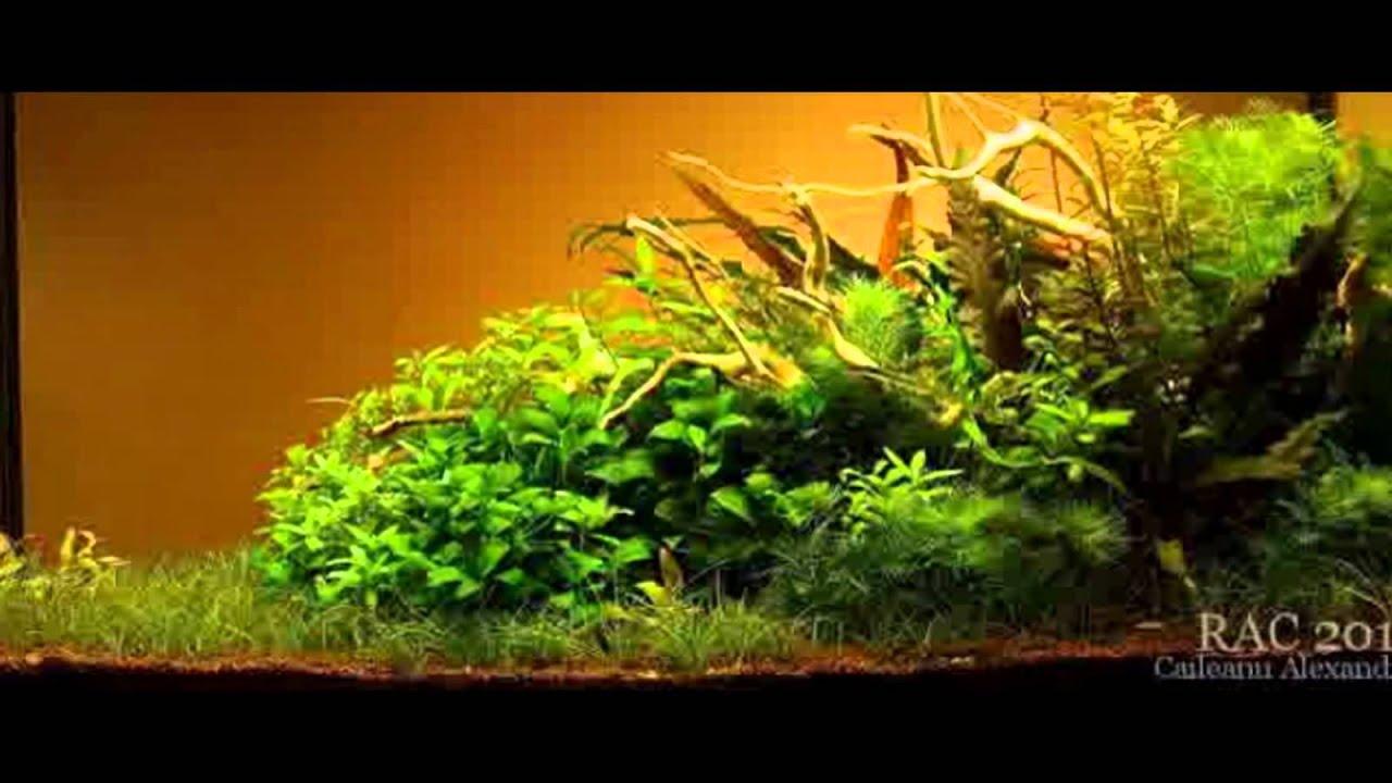 Nature Aquascape Style Part #5