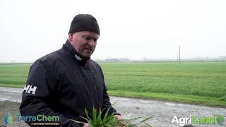 作物观察:一些冬大麦作物压力大。t2将在未来几天到期。