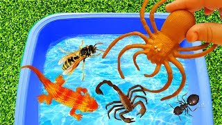 Learn Insect & Wild Animals Characters Name in Bubble Pool for Toddlers and Kids