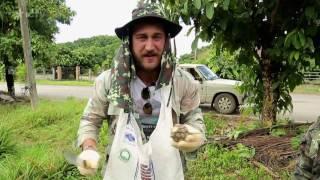 Ананасовый фермер и собиратель грибов – Особенности национальной работы –  Таиланд