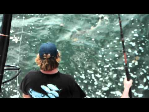 Black fin shark fishing