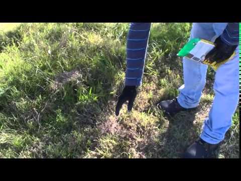 Como eliminar las hormigas del Jardin - YouTube