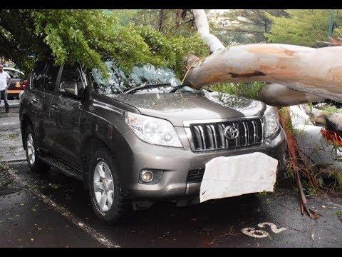 7 vehicles damaged after tree falls on them at Serena Hotel